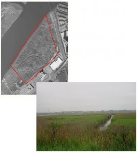 Anderson Creek Marsh