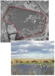 Kearny Freshwater Marsh