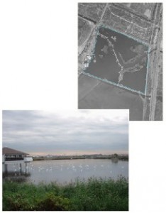 Kingsland Impoundment