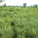 Freshwater Mitigation Site