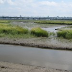 Tidal Mitigation Bank
