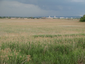 Empire tract - Non-tidal marsh. View northeast from Paterson Plank Road